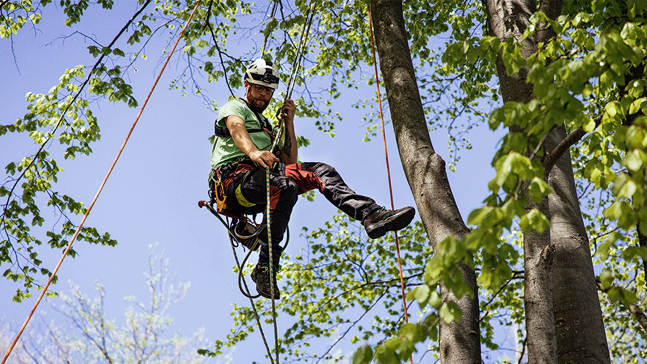 A man in climbing gear suspended on ropes in a tree