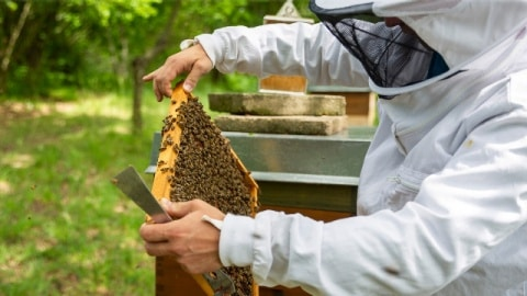 Two hands holding a honeycomb over an open beehive