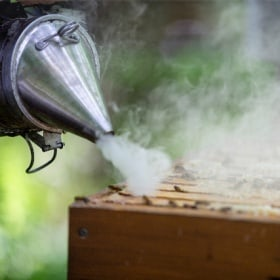 A man holds a smoker and uses it to blow smoke into the beehive